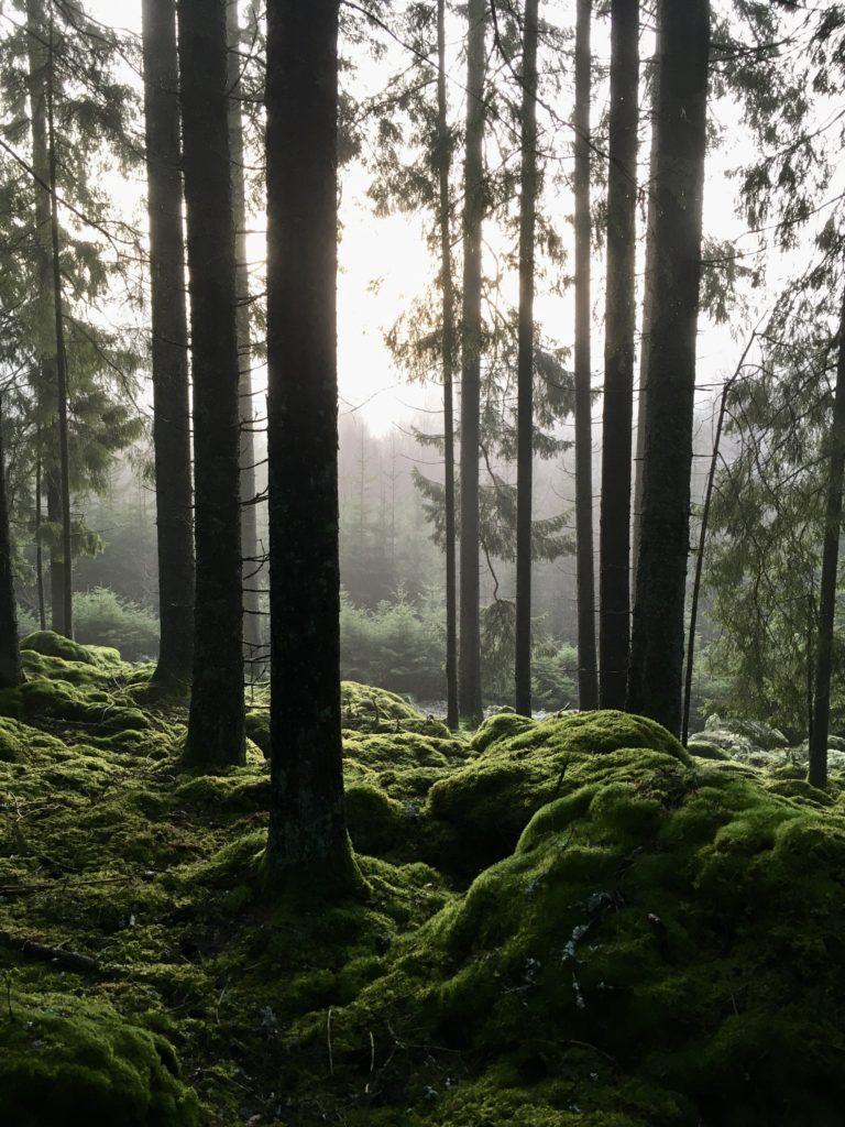 Bild 5 - Linda Bergstrand